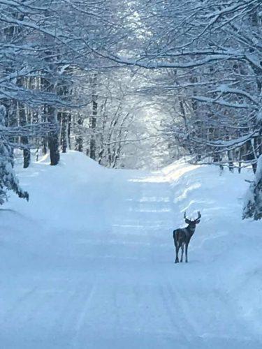 wisconsin_deer_whitetail