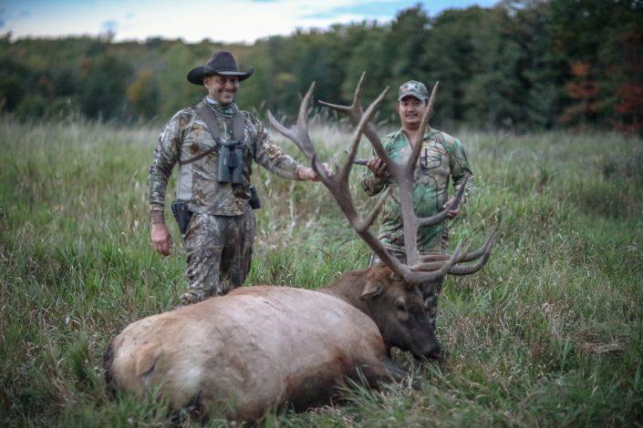 Elk 2