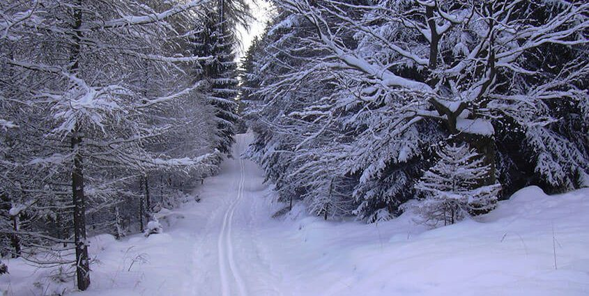 Cross Country Skiing | The Wilderness Reserve
