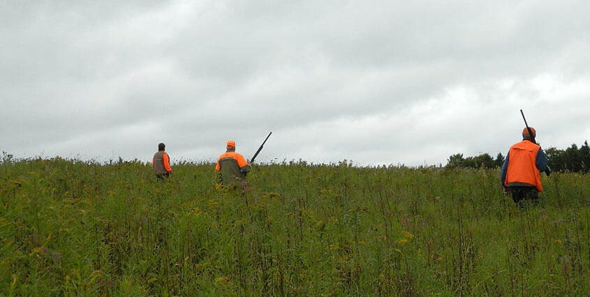 Guided Pheasant Hunting