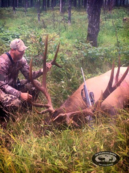 Nice Elk Trophy from Guided Hunt