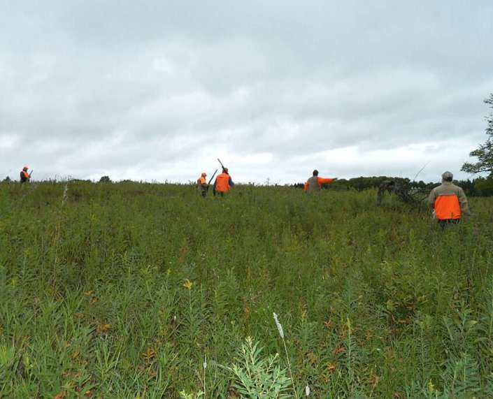 Pheasant Hunting Phelps Wisconsin