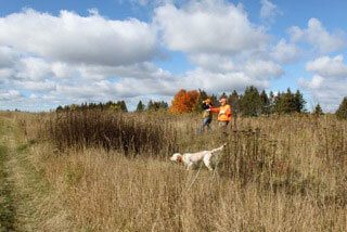 Pheasant Hunting | The Wilderness Reserve