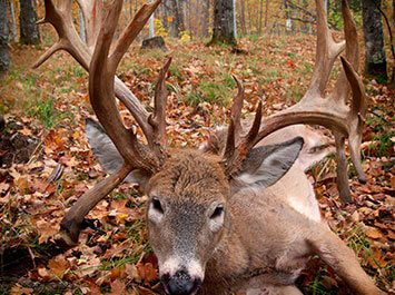 Trophy Whitetail Deer Hunts